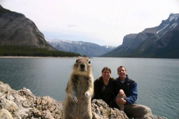 Top 15 Best Tourist Photos Squirrel Photobomb