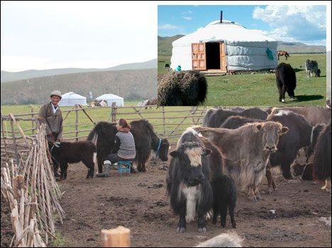 jurt-mongolia