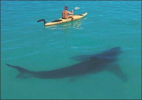 Sharks praia de boa viagem brazil