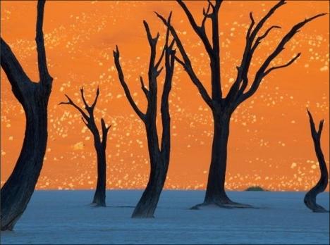 Deadvlei Desert Namibia fake or real?