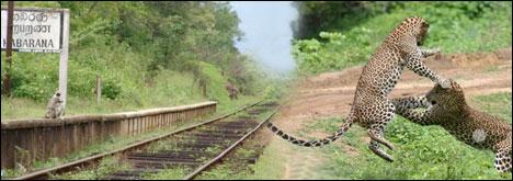 Cheap holiday destinations: Habarana, Sri Lanka