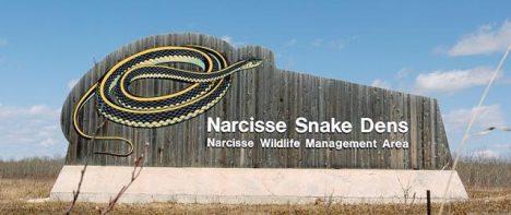 Narcisse Snake Pits Manitoba