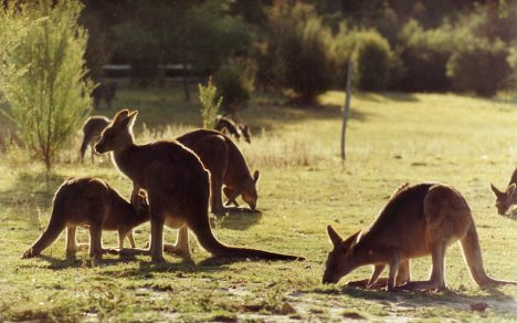 Australias most photographed tourist attractions